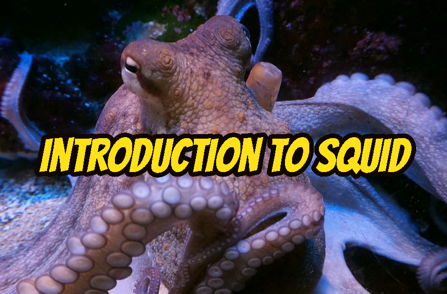 Introduction To Squid Proxy Tutorial with Examples