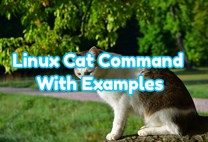 Linux Cat Command With Examples