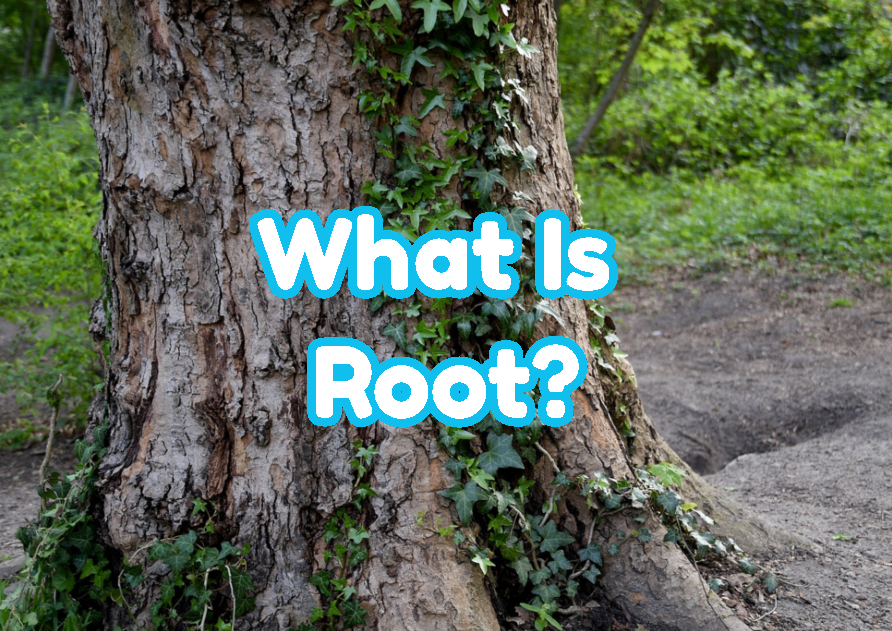 What Is Root?